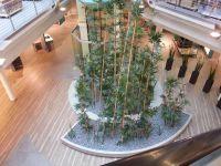 Innenraumbegrünung - Bambus - Küchenausstellung bei Erfurt