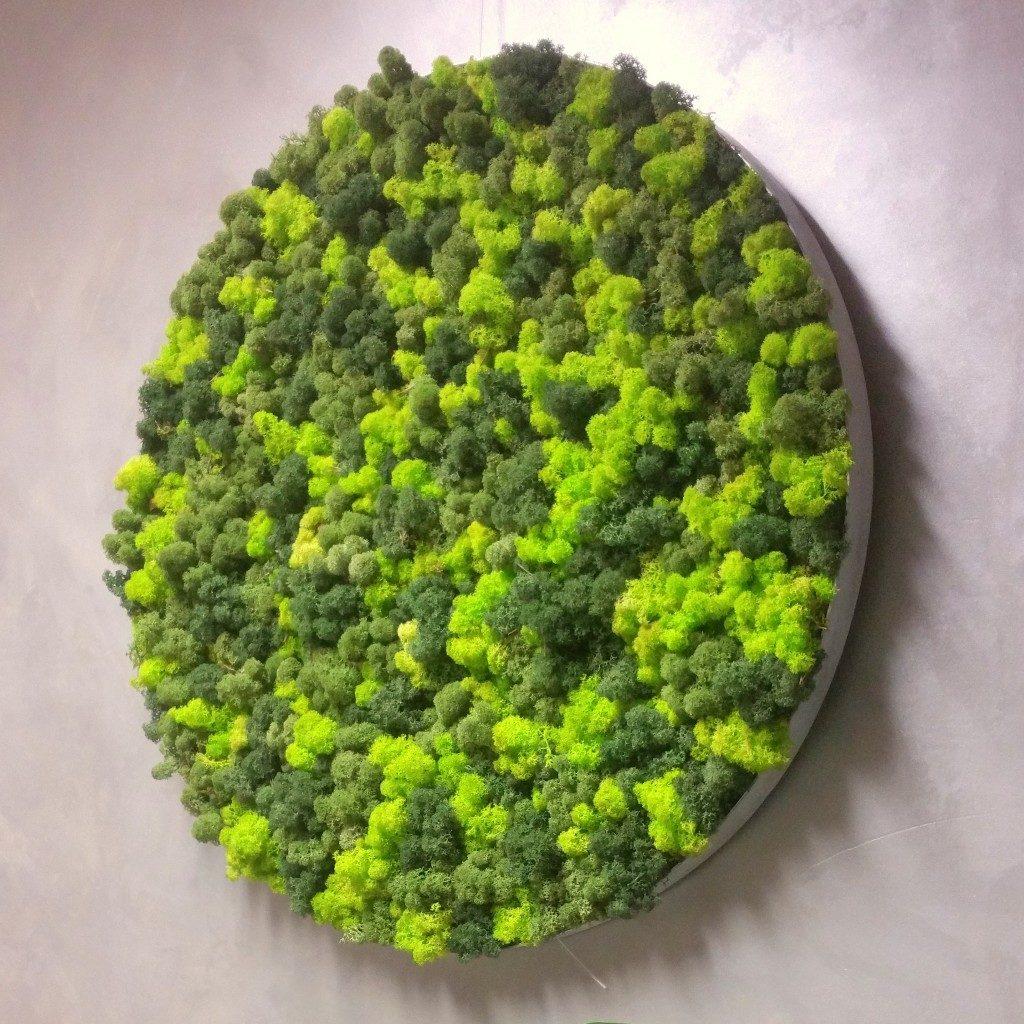 Runde Moosbilder mit Islandmoos und Alurahmen. Unsere neue Kollektion Elements - Erde