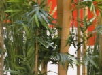 Grünraumgestaltung - Bambus - Möbelhaus - Küchenausstellung