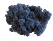 islandmoos-blau-3