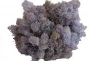 Islandmoos - Lavendel