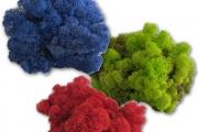 Moos - Islandmoos - Farben - Mix - Details