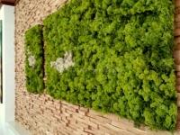 Mooswand - Islandmoos green - Hoteleinrichtung
