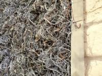 moosbilder-alu curly moos-grau-1