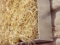 moosbilder-alu curly moos-natur-1