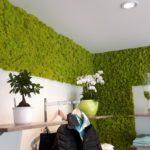 Mooswand - Islandmoos Frühlingsgrün - Bekleidungsgeschäft