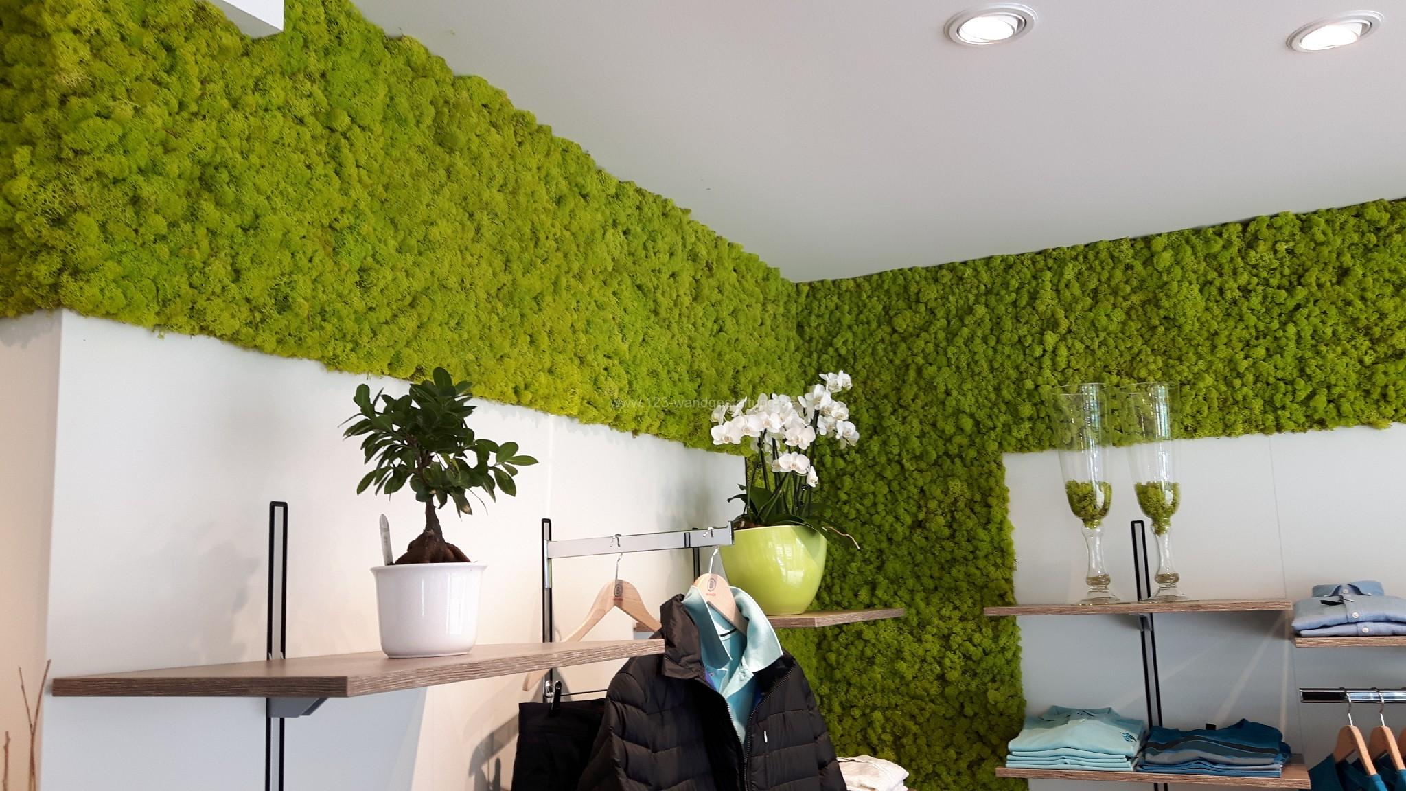 ladenbau moosw nde mit islandmoos als wandgestaltung. Black Bedroom Furniture Sets. Home Design Ideas